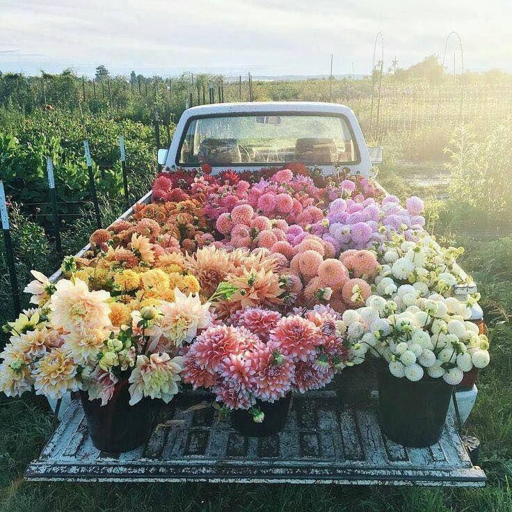 Fleur et Fleurs