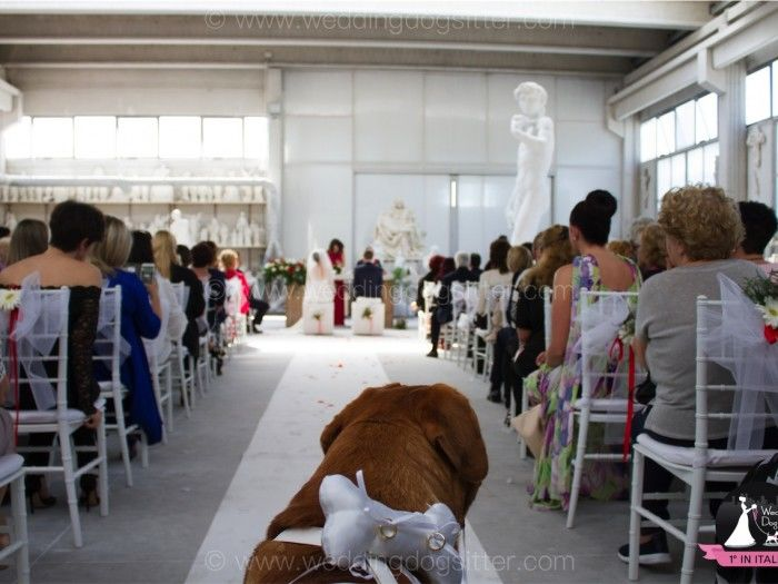 Wedding Dog Sitter