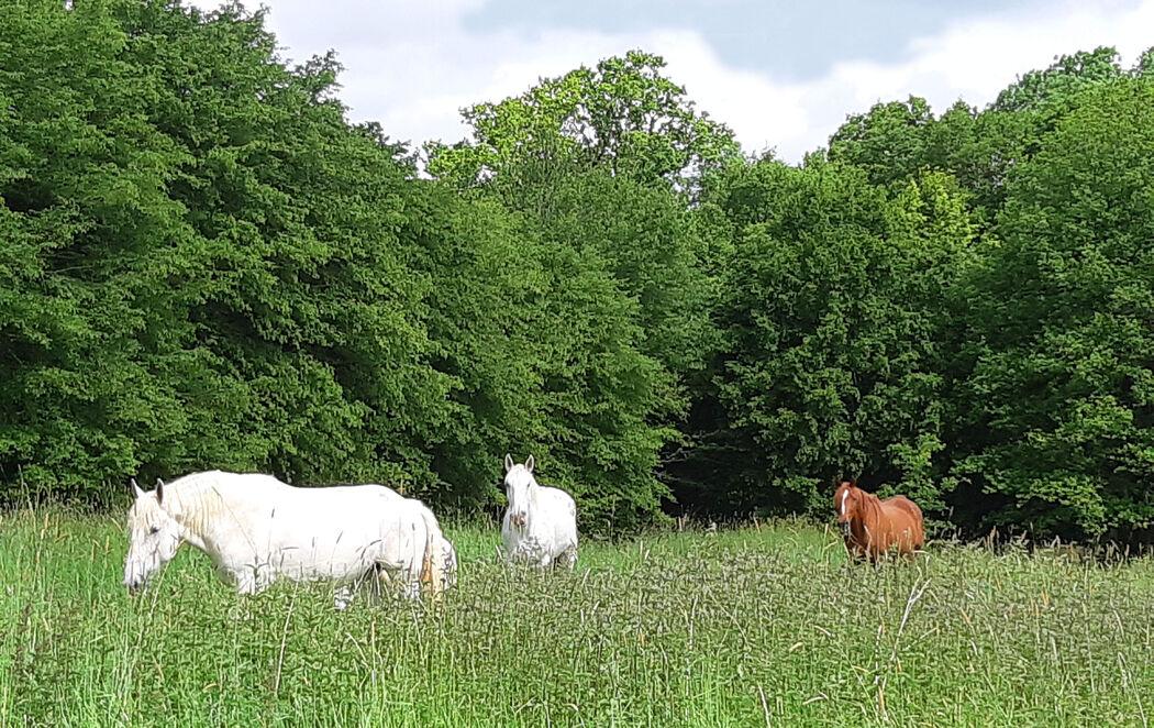La ferme du Coudray