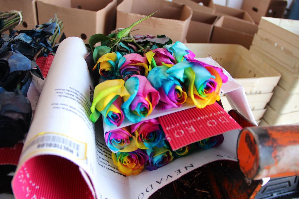 Rosas Multicolor Importadas
