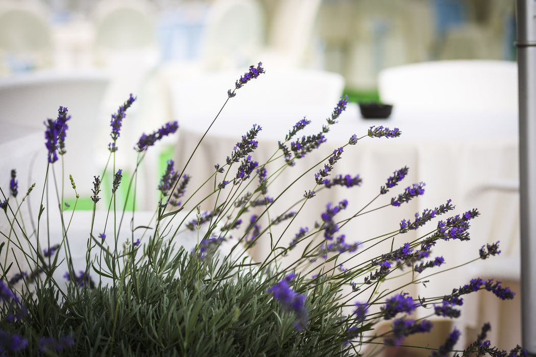 Grand Hotel Pianeta Maratea - il profumo di lavanda   - photo: http://www.ndphoto.it/