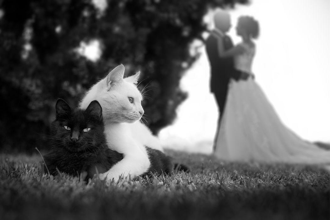 Matrimonio livorno, fotografo pisa, wedding tuscany, fotografo matrimonio firenze,