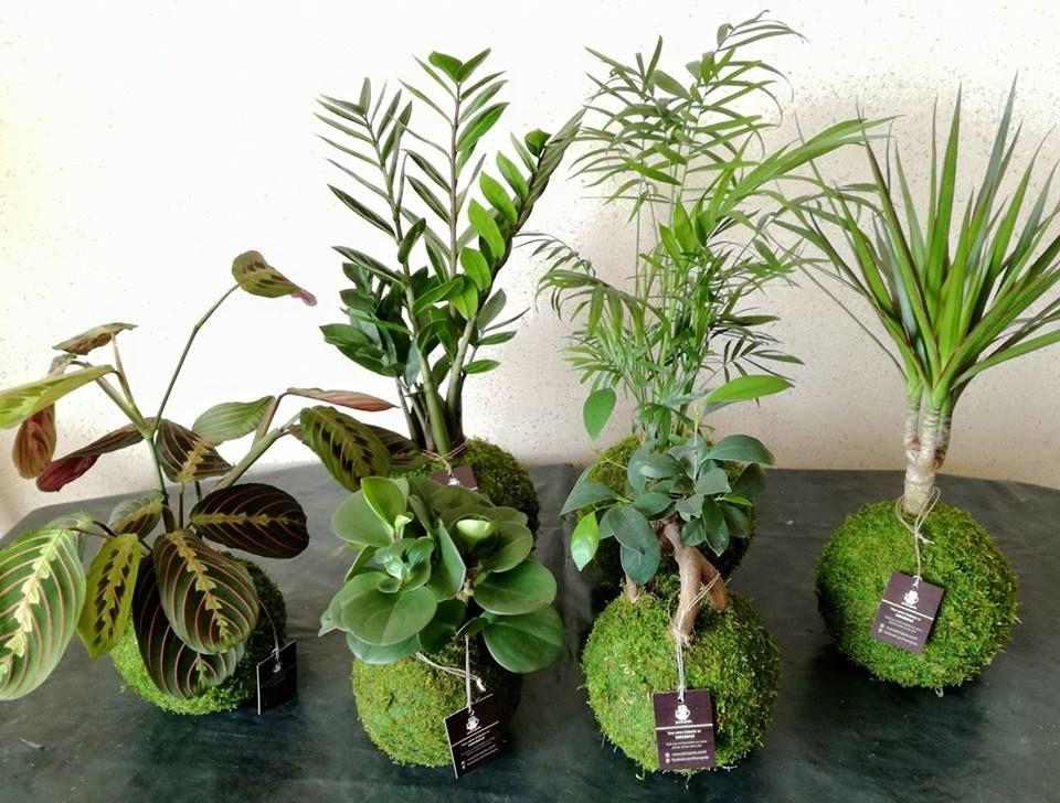 Plantapolis