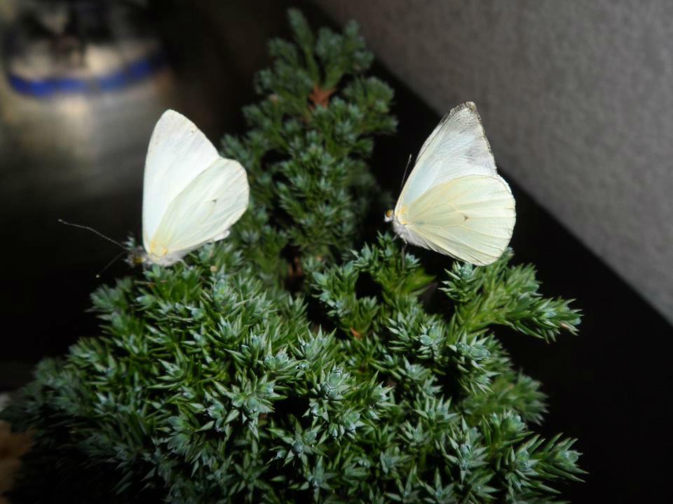 Mariposas Flores Que Vuelan