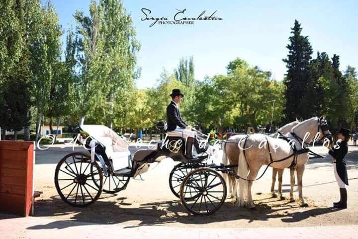 OAC coche de caballos