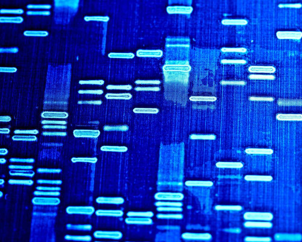 Identidad Genética