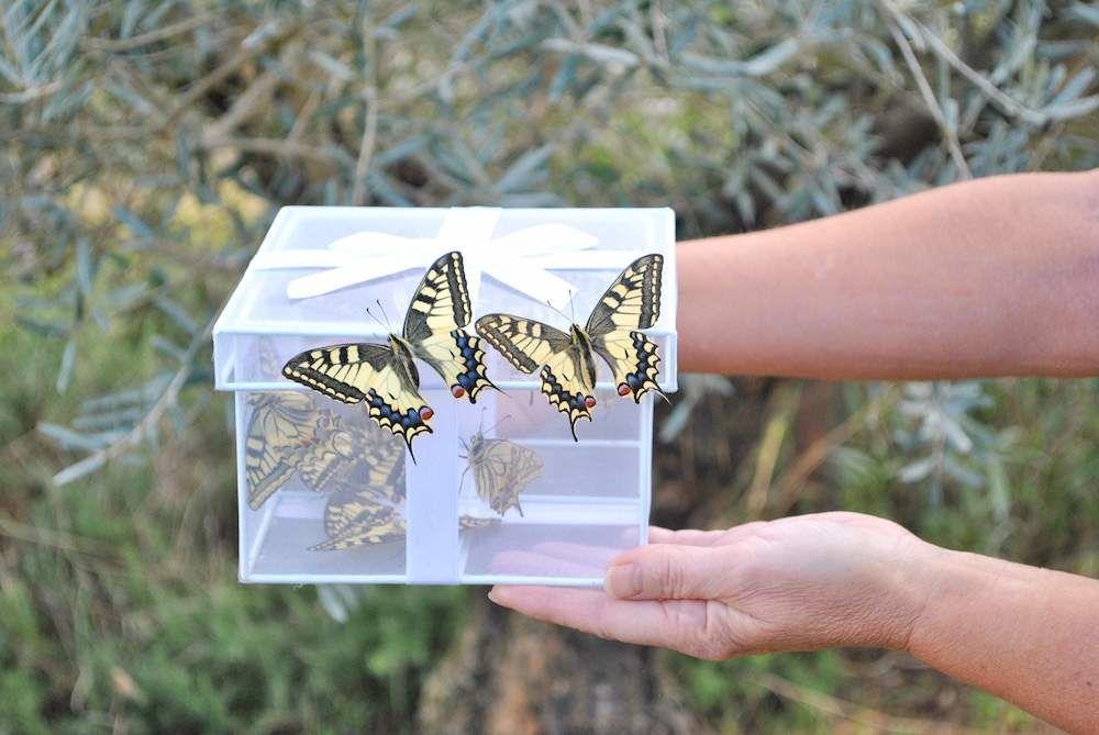 Papilys : lâcher de papillons