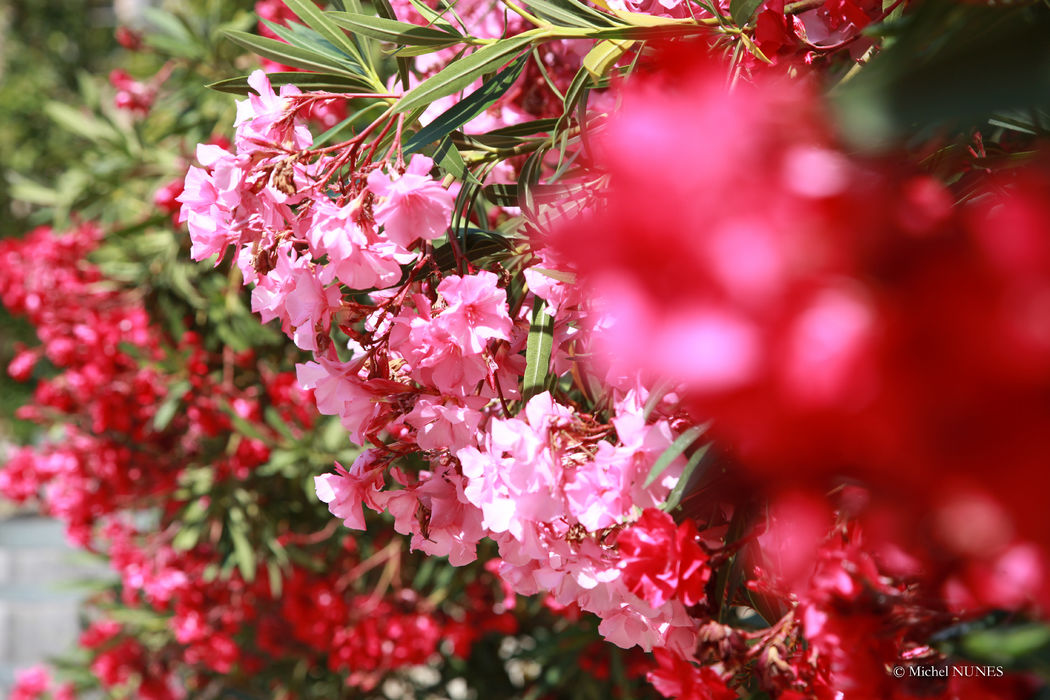 Un domaine fleuri ..