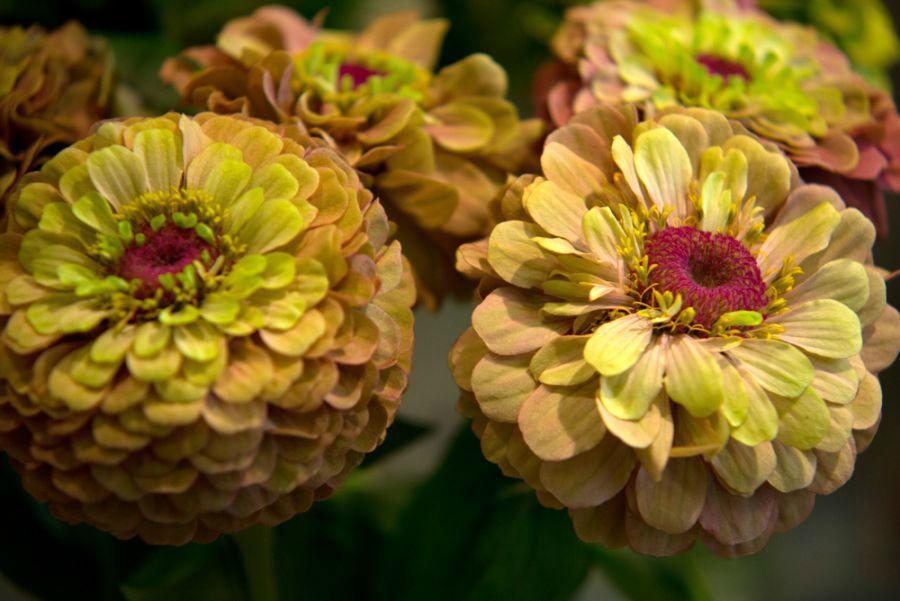 Beispiel: Blütenpracht, Foto: Idea Verde.