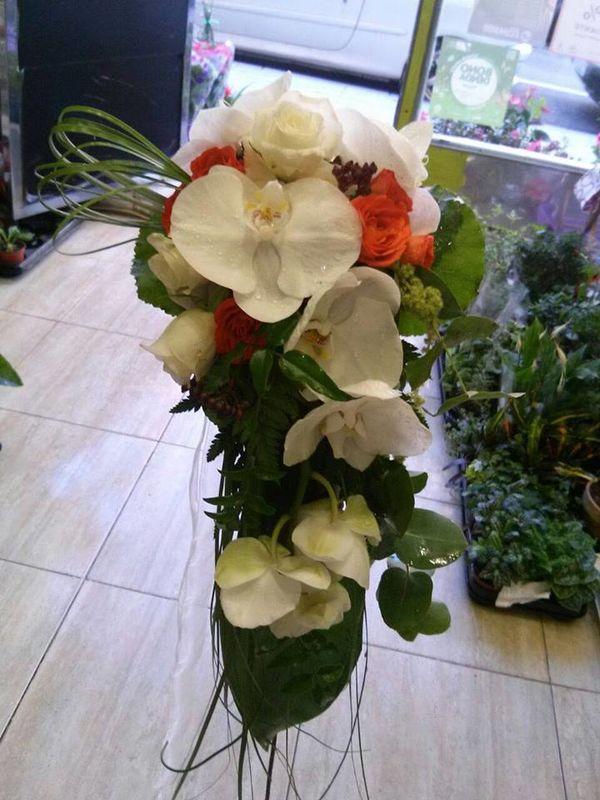 Liana Floristas