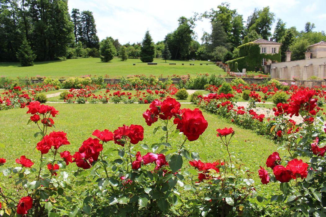 les superbes  rosiers des jardins à la française