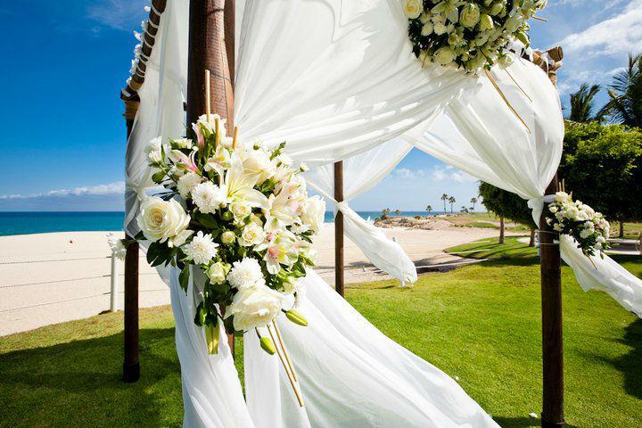 Canopy & flores