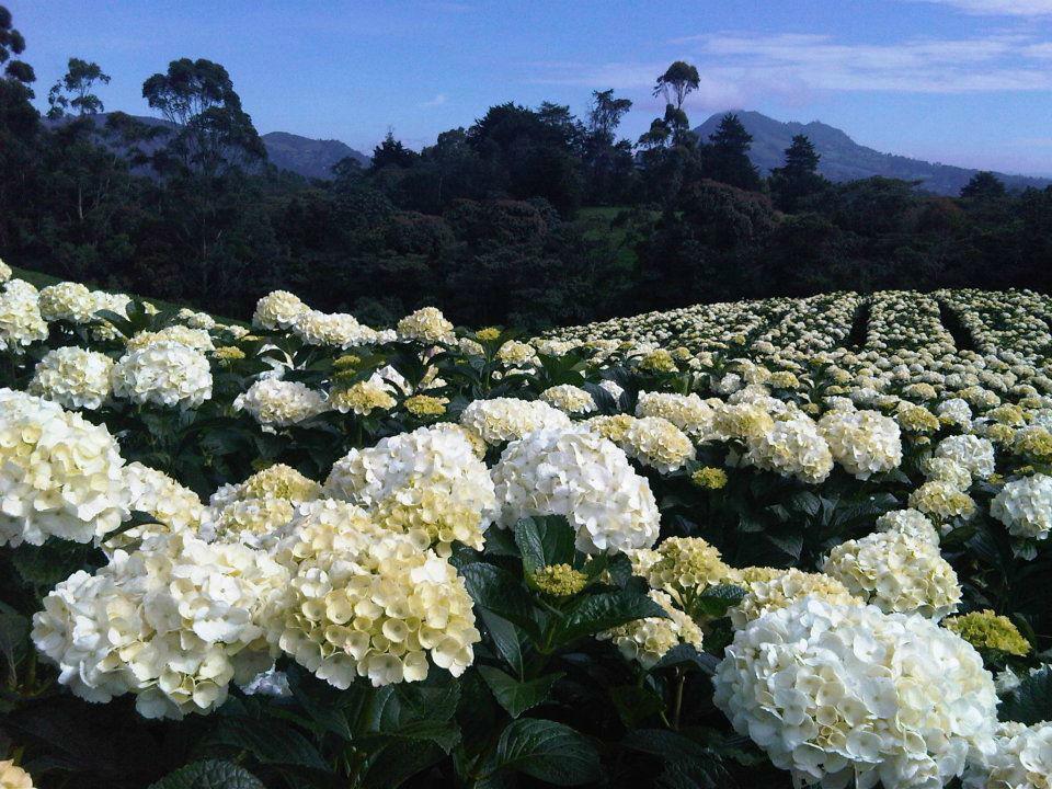 Flores del Este
