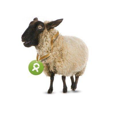 Geschenk Schaf (24 Euro), Foto: OxfamUnverpackt
