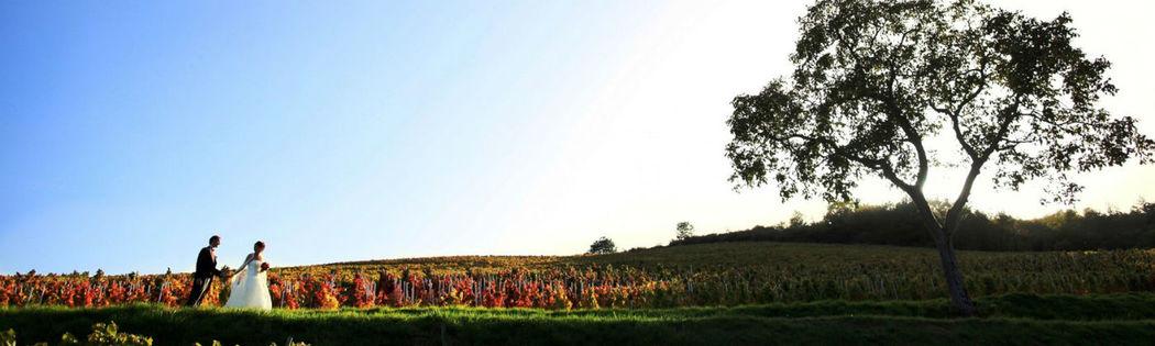 Le château de Varennes, vignoble