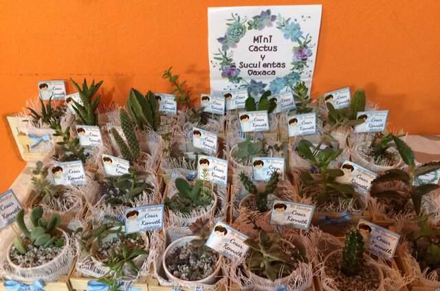 Mini Cactus y Suculentas Oaxaca