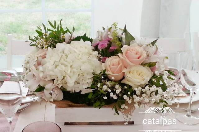 Catalpas Jardinería