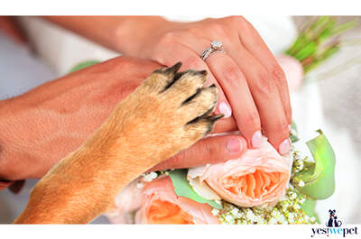 Yes! We Pet - Tu perro en tu boda