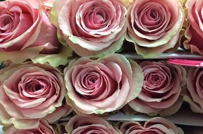 Flores Allende