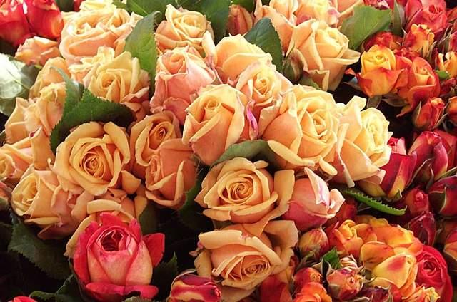 Blumen Außem