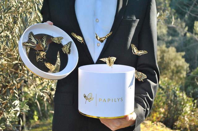 Papilys : envolée de papillons